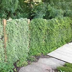 Paysagiste à Tours, Serrault Jardins concoit et réalise votre jardin.