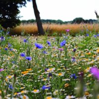 Jardin-écologique-serrault-jardins-5